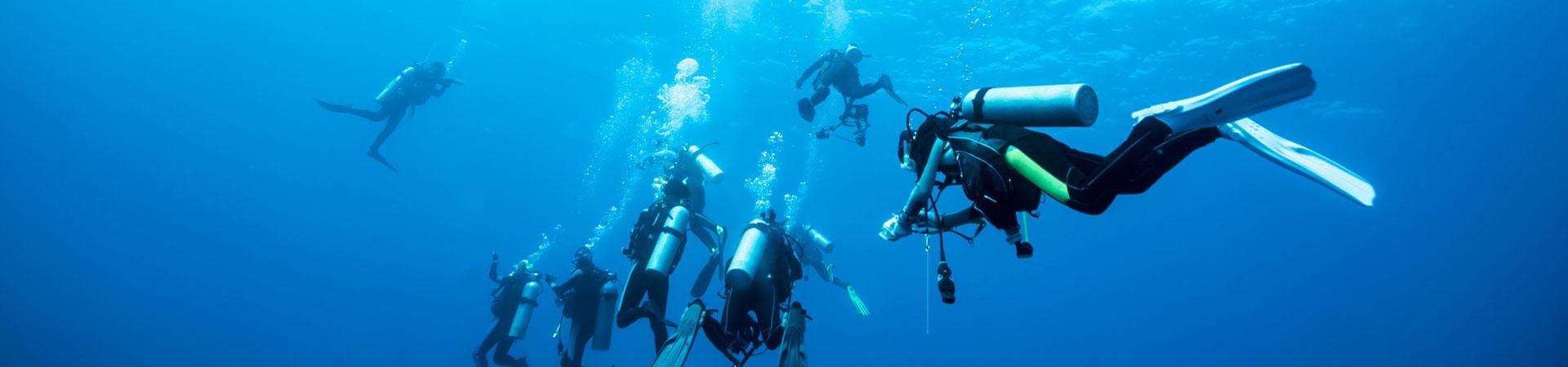 Taucher und Fische Malediven