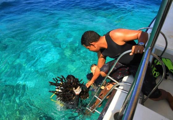 Korallenrettung