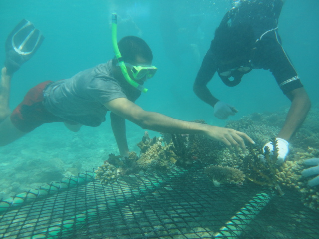 Korallenrettung Malediven