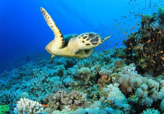 Malediven entdecken