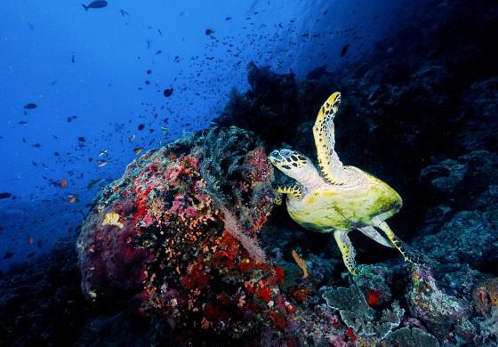 5 Sterne für das COOEE OBLU Unterwasserleben